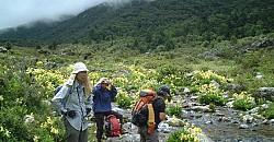 Yello Primula Flowers 1