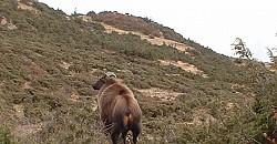 Jaral at Syanboche 3700m